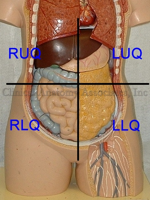 682 Abdominal Quadrants on ruq organs
