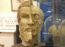 Wax bust of Andreas Vesalius by Pascale Pollier